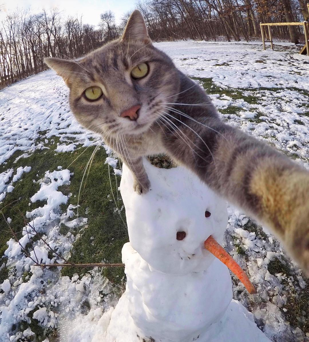 Прикольные коты фото ново
