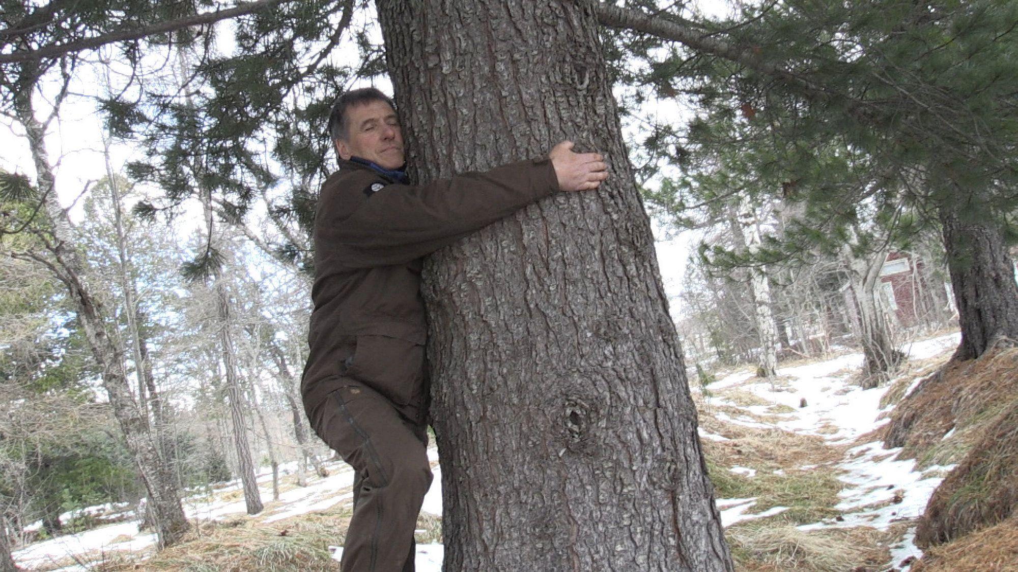 Жителям Исландии советуют обнимать деревья.